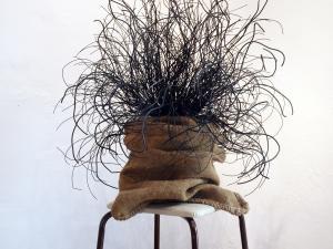 Hairy Plant